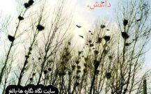❇️ – شهر کلاغ های بی داعش : قسمت ۳ و  ۴