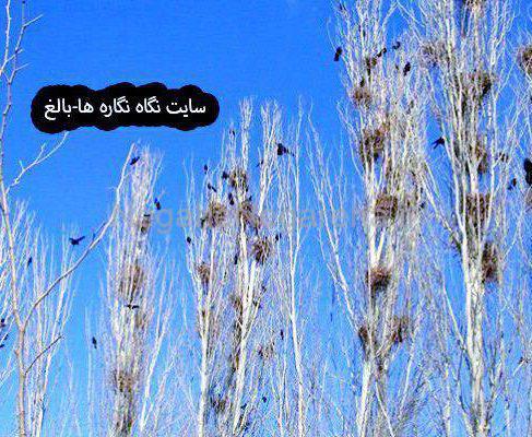 ❇️ – شهر کلاغ های بی داعش : قسمت ۷  و ۸
